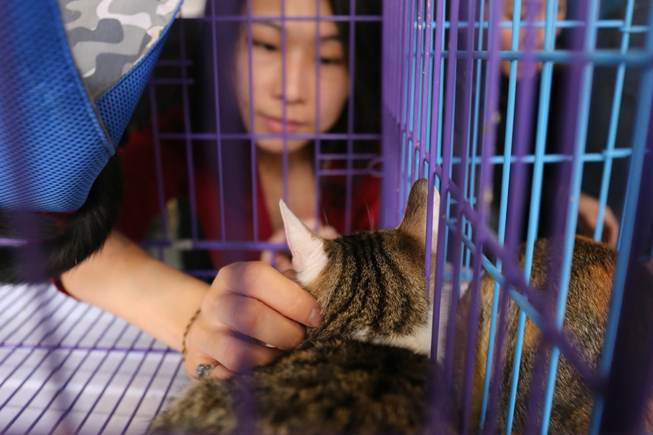 女義工在Simon舉辦的「貓奴認領日」內,幫忙安撫貓咪。(蔡正邦攝)