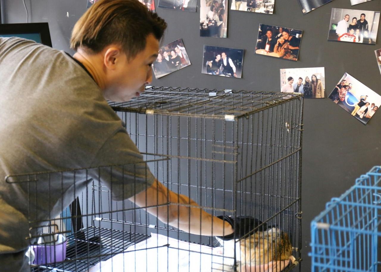 Simon Siu 為義務義工,收養流浪貓狗的費用全屬自費。(洪琦琦攝)