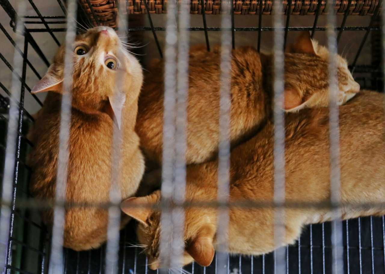 義工因對動物上心,審批收養家庭時設定稍高標準,有時會引起部分公眾不滿。(洪琦琦攝)