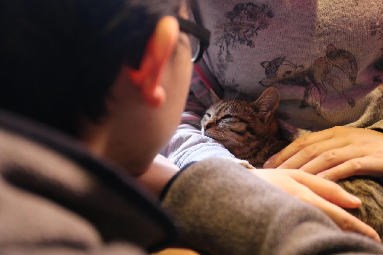 一名男子凝望着欲領養的貓。(蔡正邦攝)