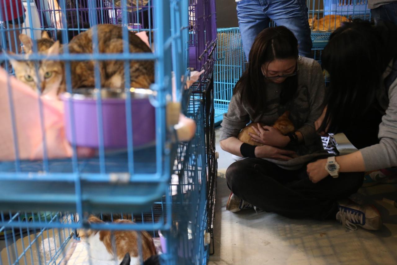 出席「貓奴認領日」的貓奴們,坐在地上把玩欲領養的貓。(蔡正邦攝)