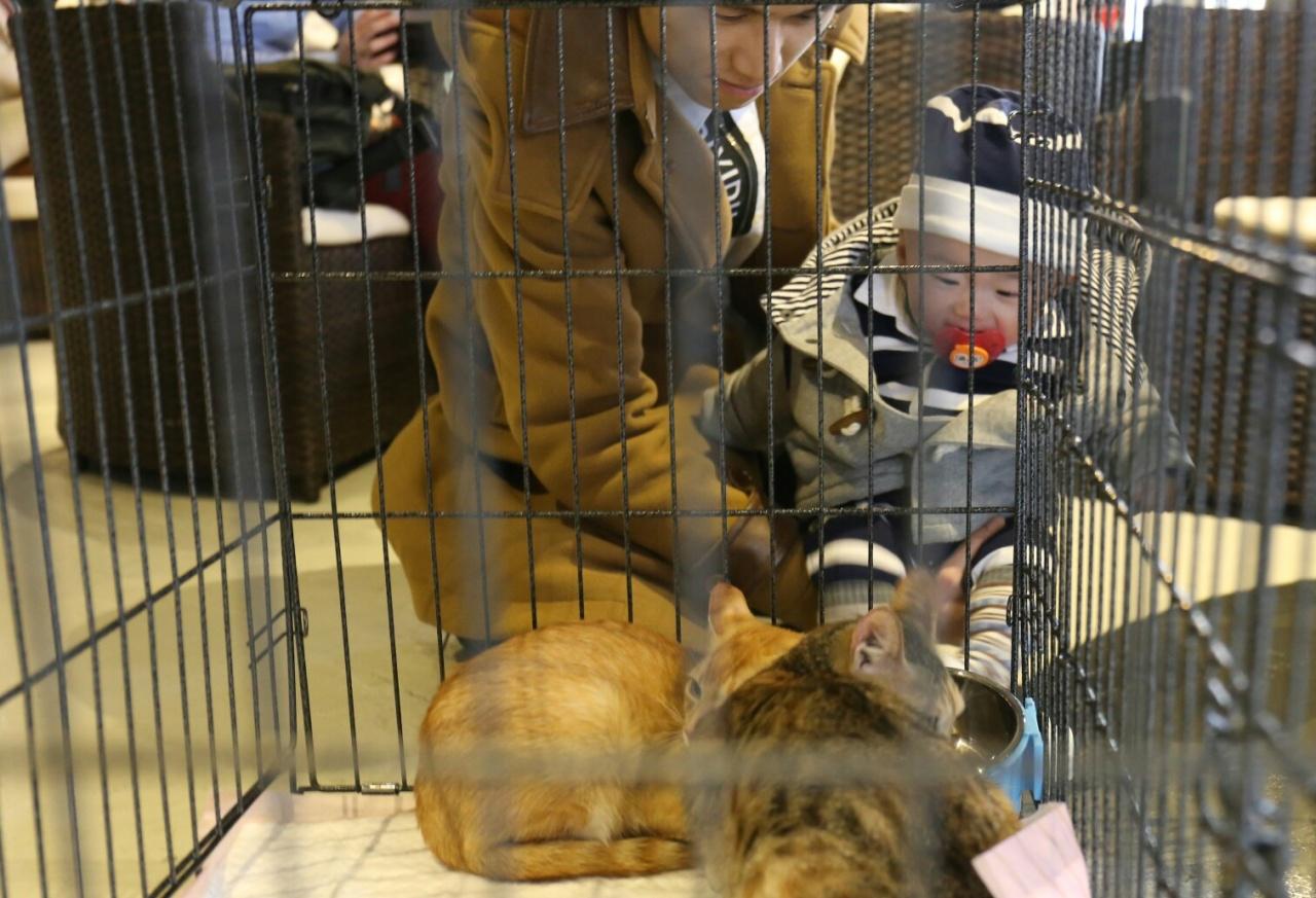鄧生帶着7個月大的鄧寶寶到場挑選領養貓,希望貓咪陪伴鄧寶寶成長之餘,也願鄧寶寶能從照料寵物一事上學習責任心。(蔡正邦攝)