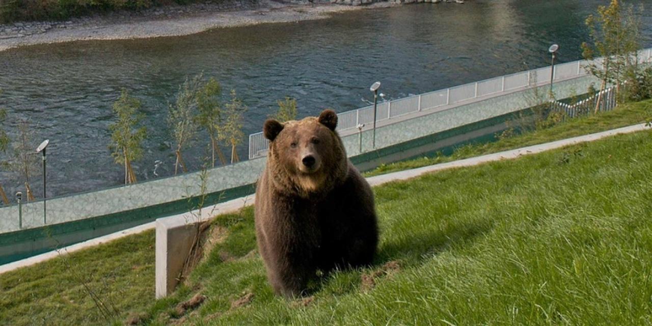 在熊公園能近距離看到黑熊。 (Bern旅遊局圖片)