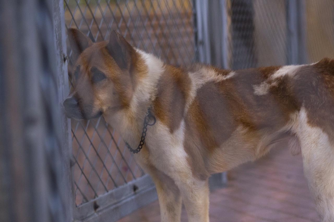 沒有人領養的貓狗,被政府或動物機構施針殺死,這做法有沒有問題?(江智騫攝)