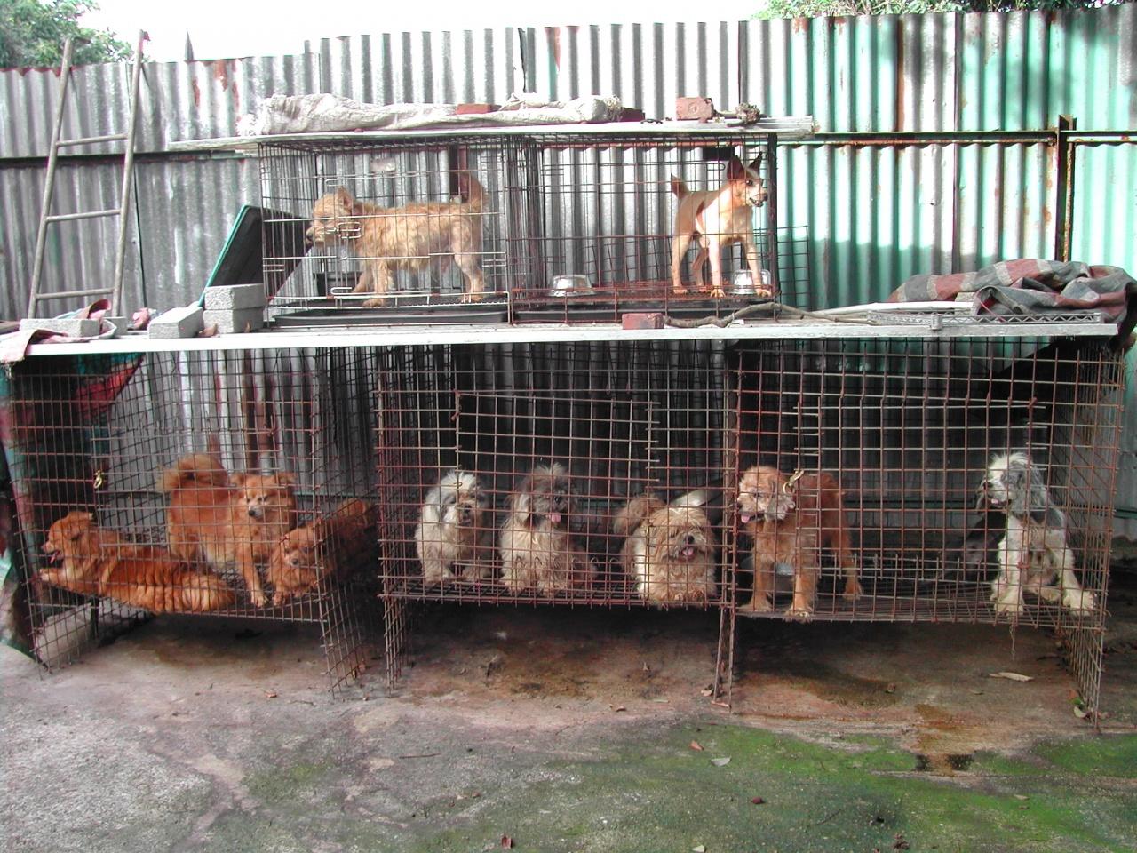 本港無牌繁殖場數目仍不明,現今佔據著寵物店市場。(照片來源:非牟利獸醫診所)