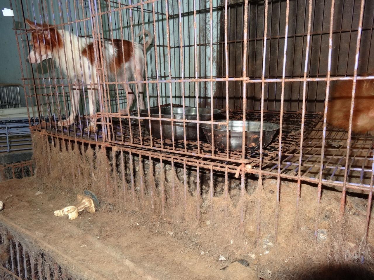 缺乏打理的環境,也會導致動物患上白內障。(照片來源:愛護動物協會)