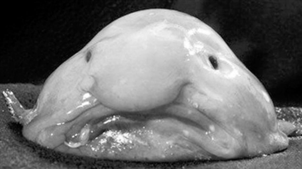 內地網路紅人「魚精女」整容上癮 樣貌怪異被指與水滴魚「撞面」