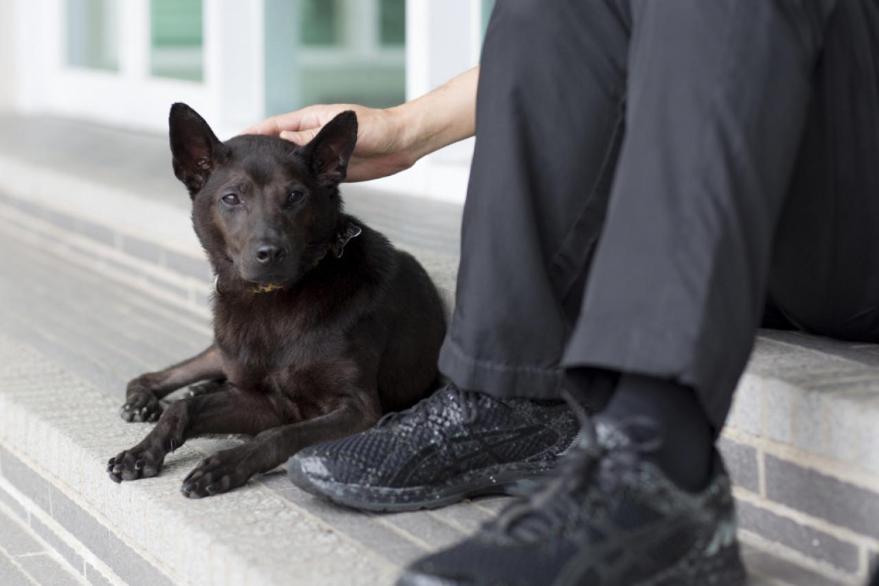 每隻狗狗都是獨一無二,有心人自然能發現牠的好,人狗相處之道,其實與人類之間的相處一樣,都講求心靈上的交流。(吳鍾坤攝)