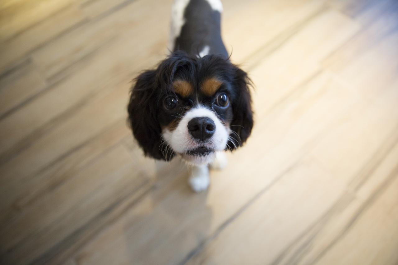 利用身體語言,例如急步趨向牠們,也可引起狗狗的注意。(龔嘉盛攝)
