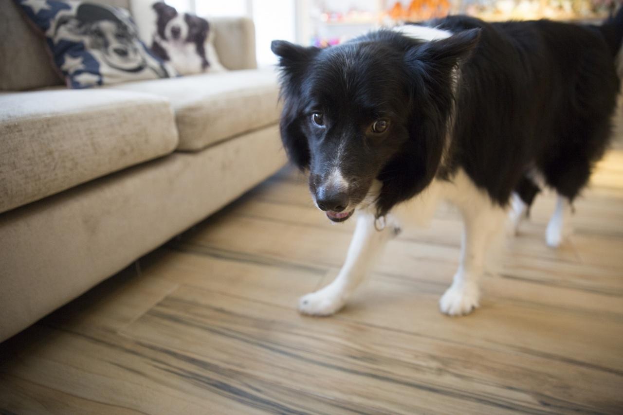 只要細心觀察,聽障或語障人士也可了解狗狗的每一項行為。(龔嘉盛攝)