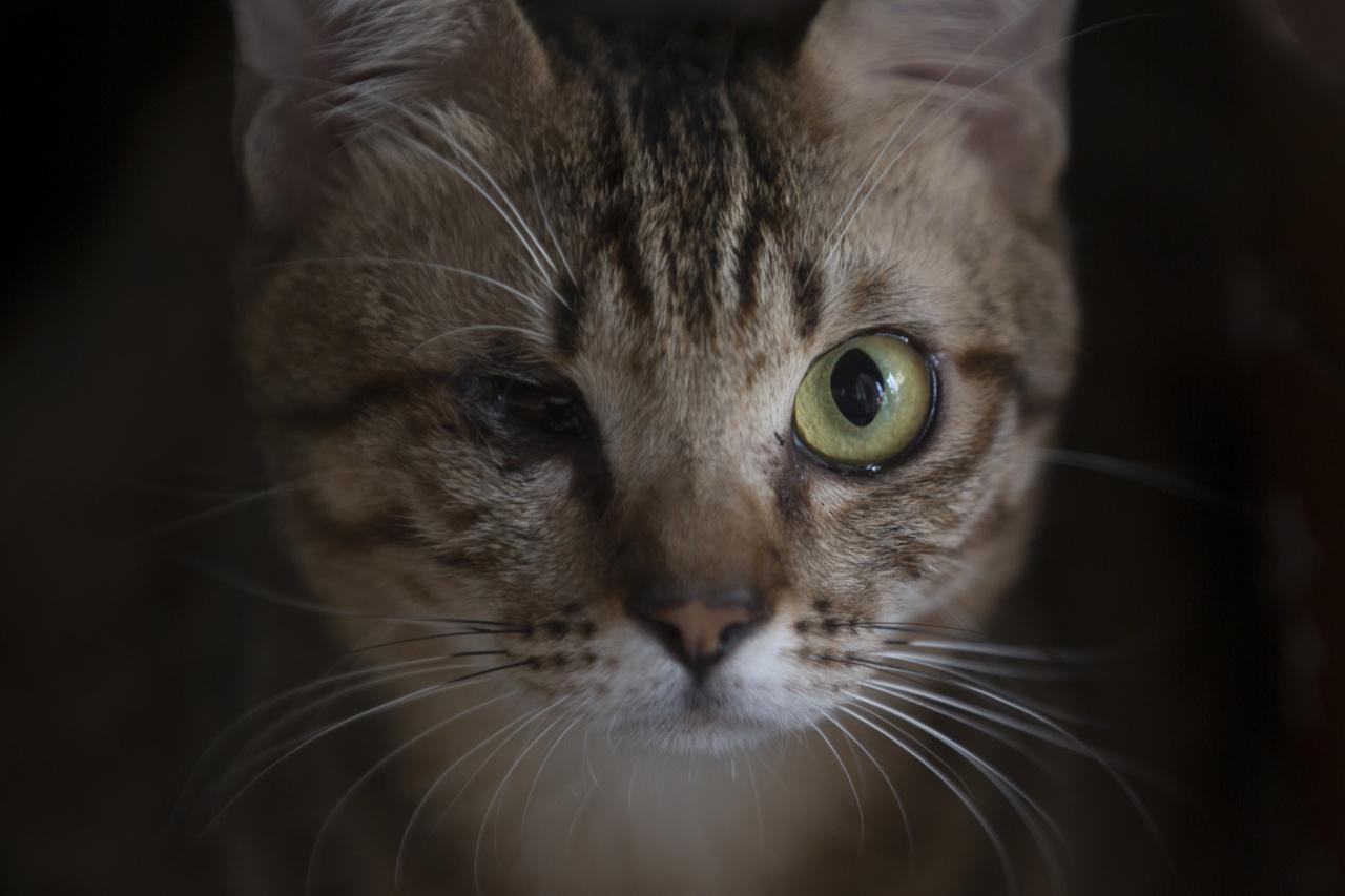 有領養者特地領養老弱傷殘的貓咪,十分難得。(李澤彤攝)