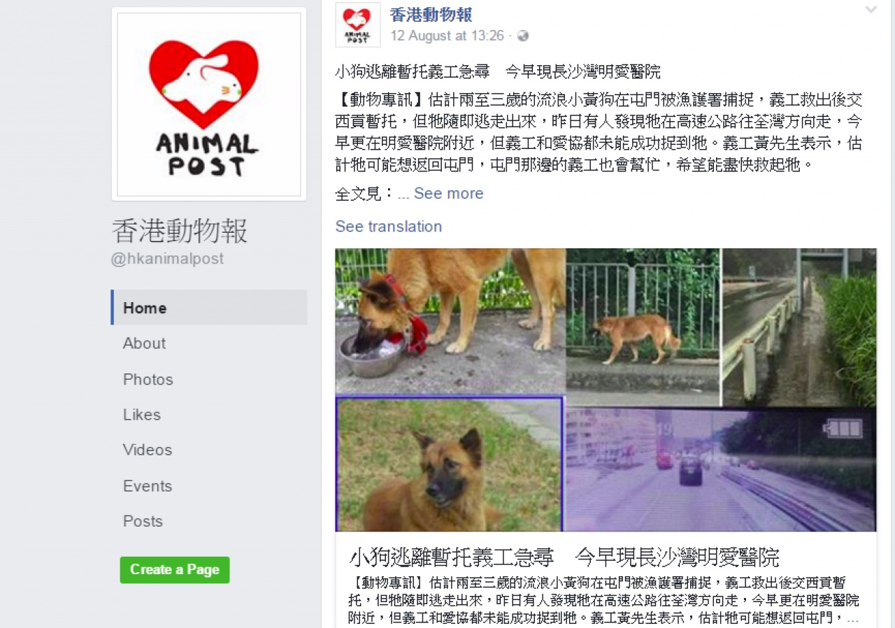 不少動物義工都會向新網媒《香港動物報》報料,希望動物消息得到很多人關注。