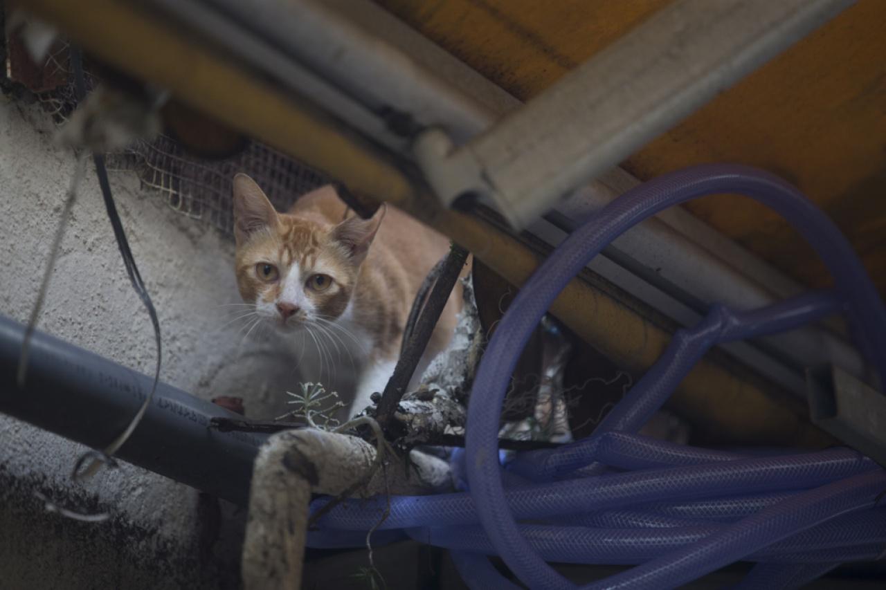 土瓜灣自8月起發生多宗虐貓事件,社區貓被人以各種殘暴手段虐殺,但警方仍未就此成立專案及進行調查。(羅君豪攝)