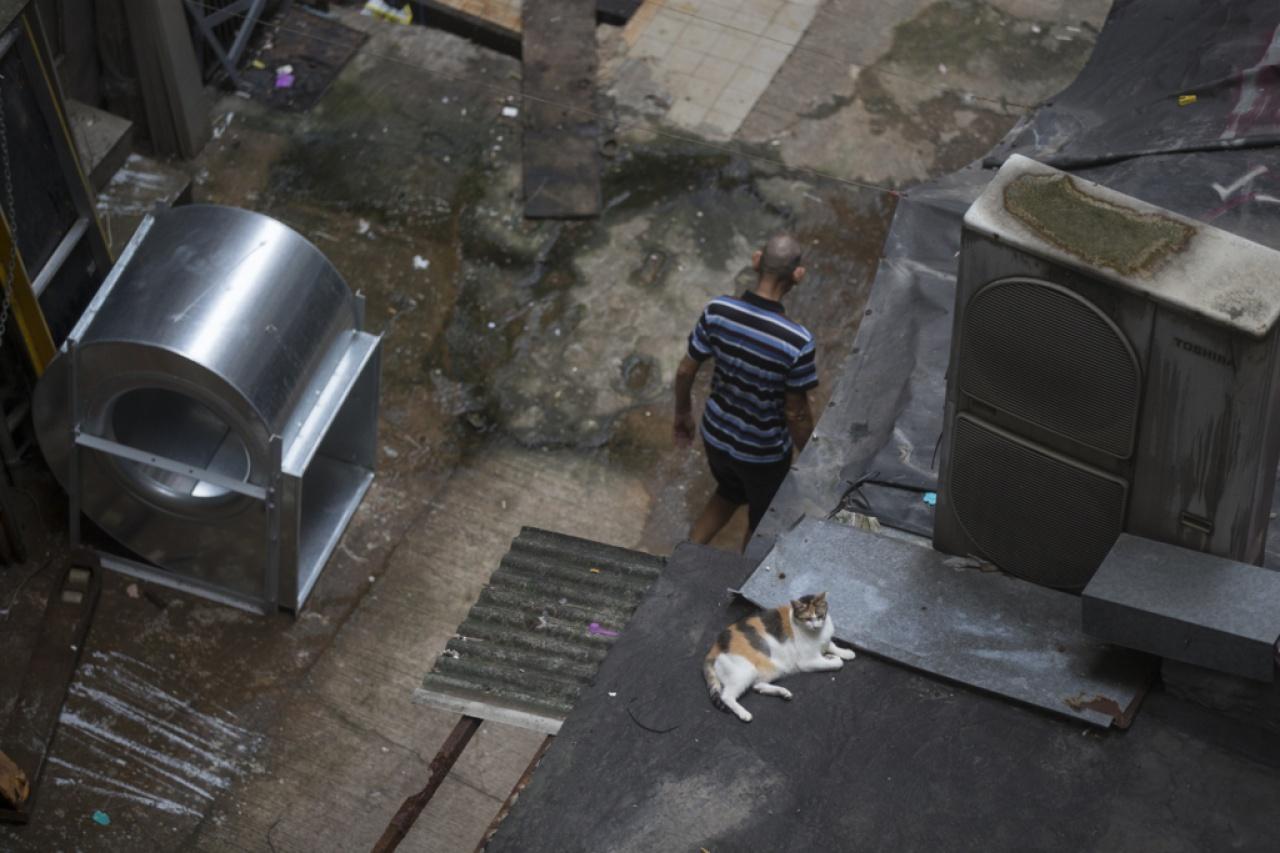 土瓜灣的流浪貓經常棲息在沒有遮掩的室外,安全令人擔憂。(羅君豪攝)