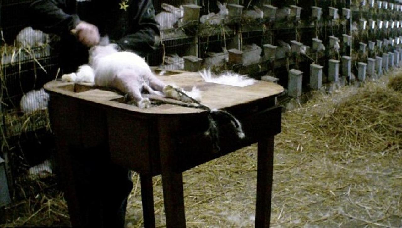 偷拍片段中可聽見兔子不斷慘叫。(Getty Images)