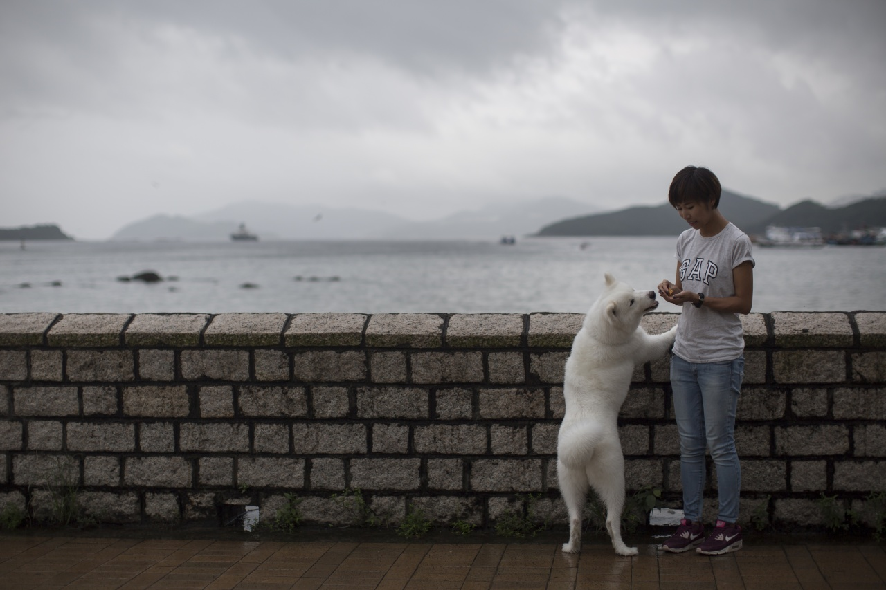 Edith經常帶Bagel到西貢海旁散步,更因此結識到不少朋友。 人狗互相扶持,Edith感謝Bagel撫平她的傷痛。