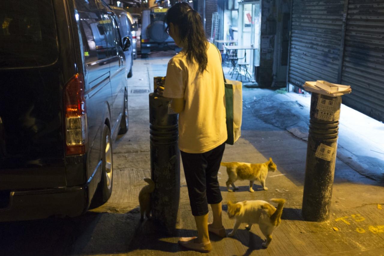 土瓜灣的街坊擔心虐貓情況無法控制,最後愈演愈烈,望警察早日將兇徒捉拿。(羅君豪攝)