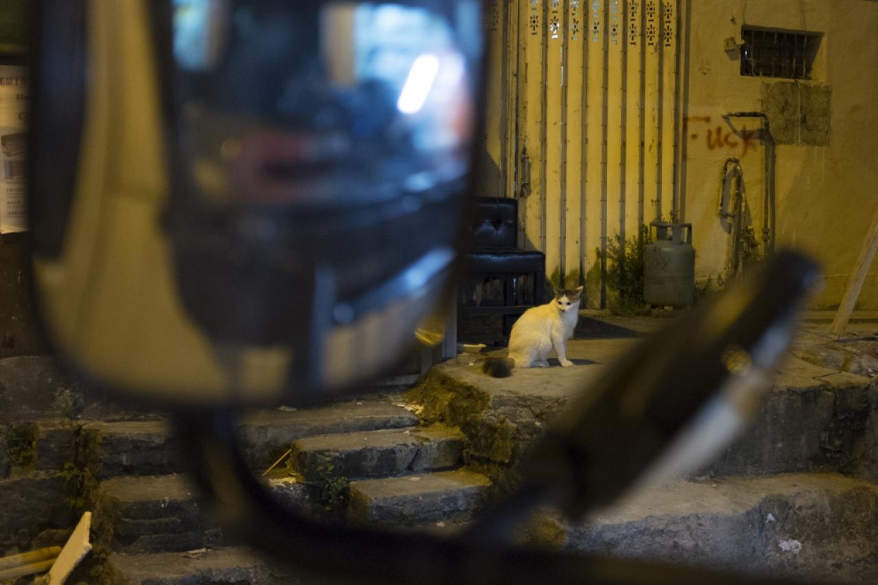 變態虐貓殺手遲遲未被捉拿歸案,土瓜灣區內居民人心惶惶,人和貓都過得不安寧。(羅君豪攝)