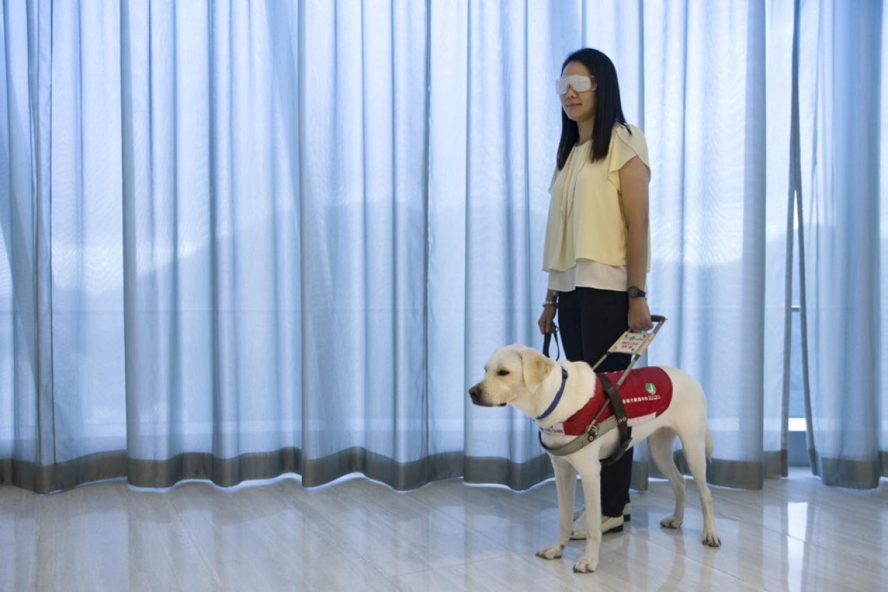 參加者可模擬視障人士,一嘗由導盲犬引路的滋味。(黃永俊攝)