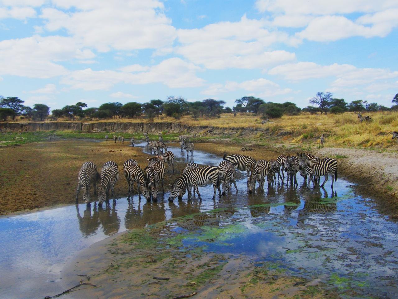 在肯亞安博塞利國家公園,Xoni和斑馬近距離接觸。(受訪者提供)