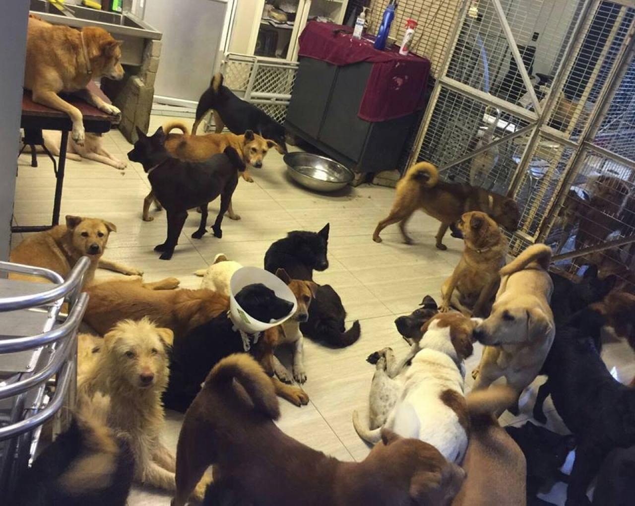 流浪狗們安坐屋內,屋外風大雨大也不用怕。(圖片截至香港流浪狗之家)