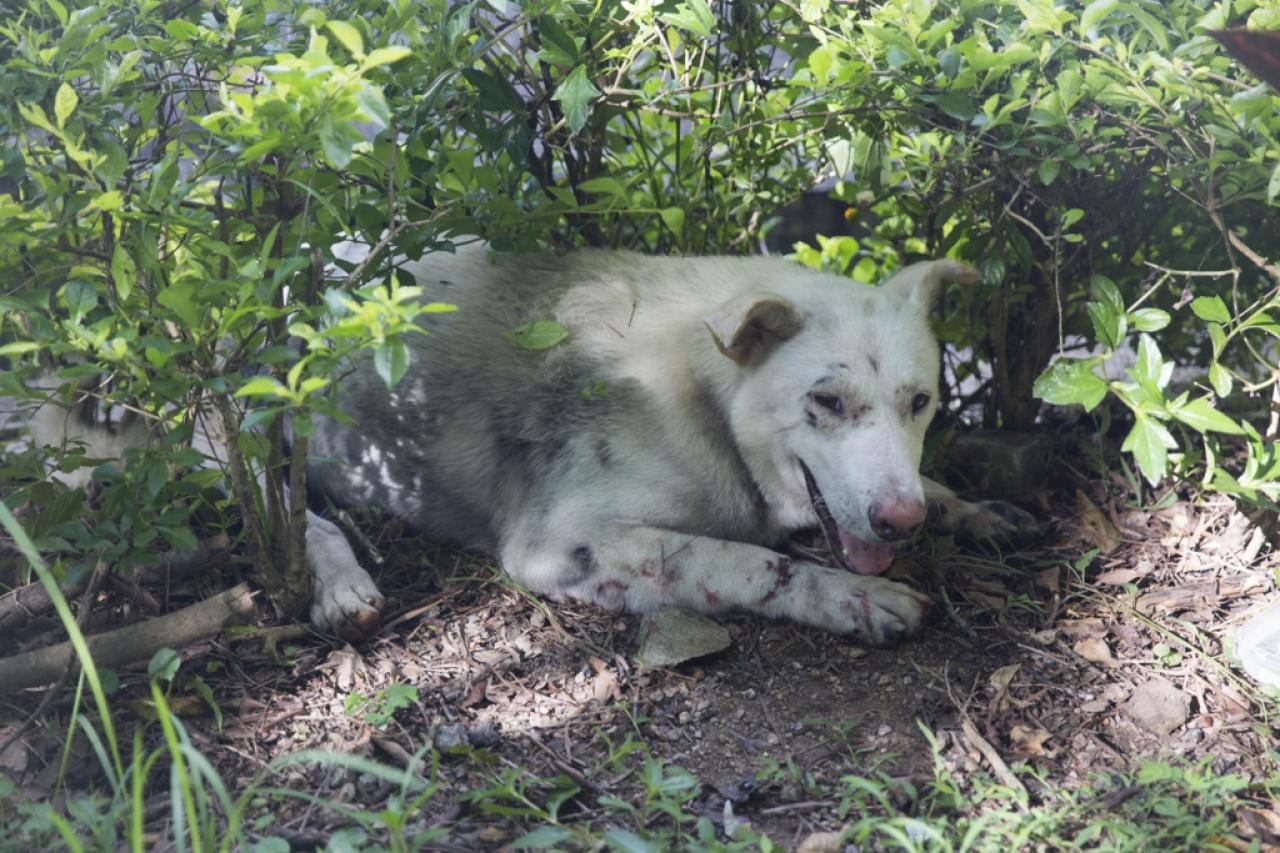 每隻動物都是義工幾經辛苦拯救的生命,若再被退養會造成難以估計的傷害。(龔慧攝)
