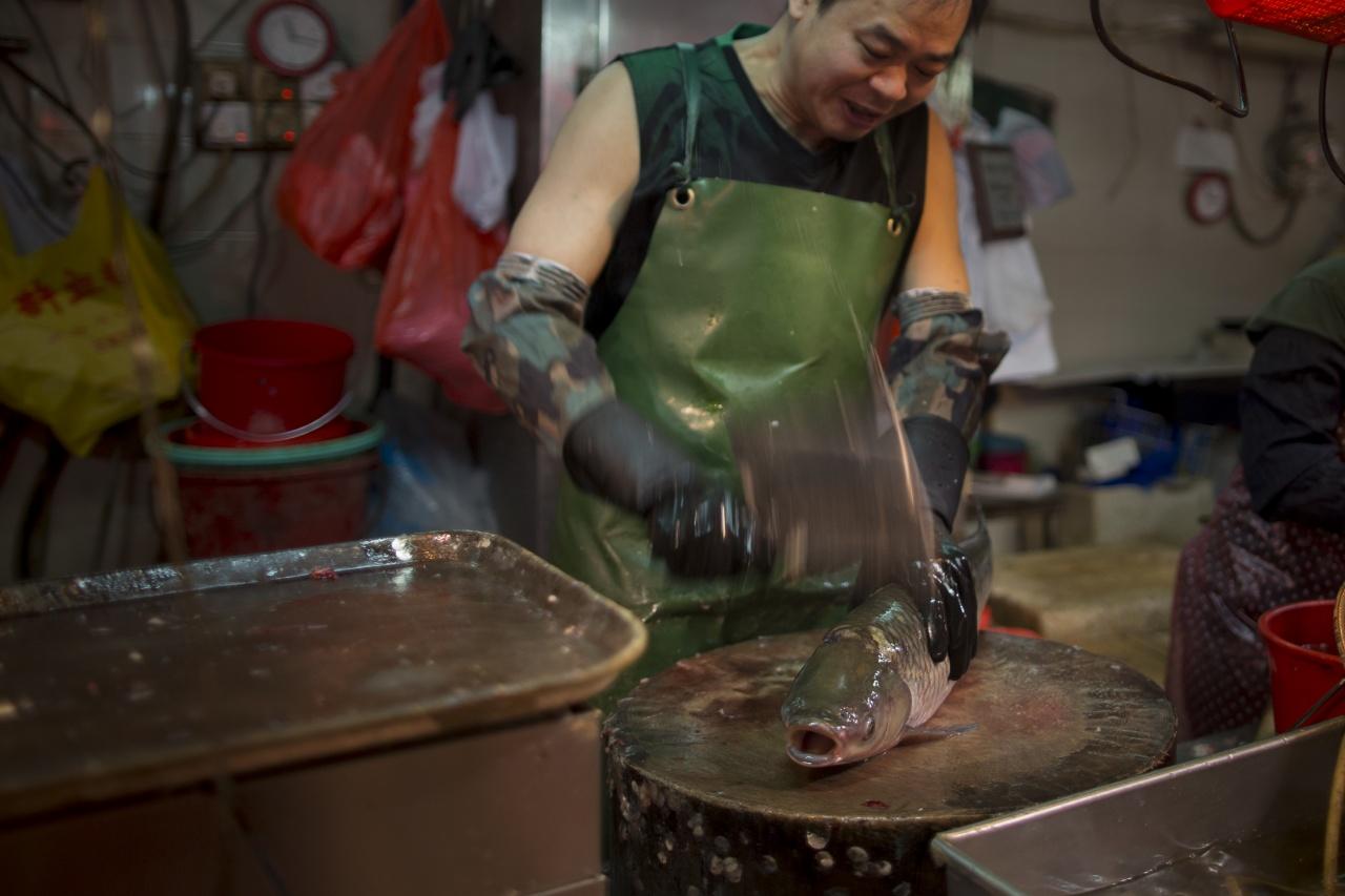 《動物保護法》規定食用動物被宰殺前,要先經人道方式擊暈,澳門街市的魚理論上須先扑暈才可宰殺。
