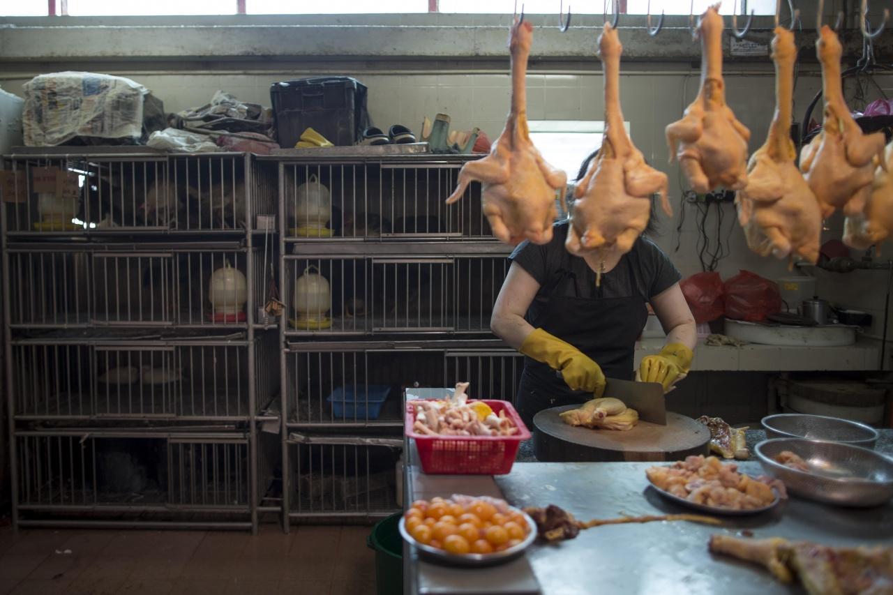 愛協2010年報告批評,利刀切割雞頸放血是不人道的屠宰方法,因雞隻被割喉後的20秒或更長時間內仍有知覺。