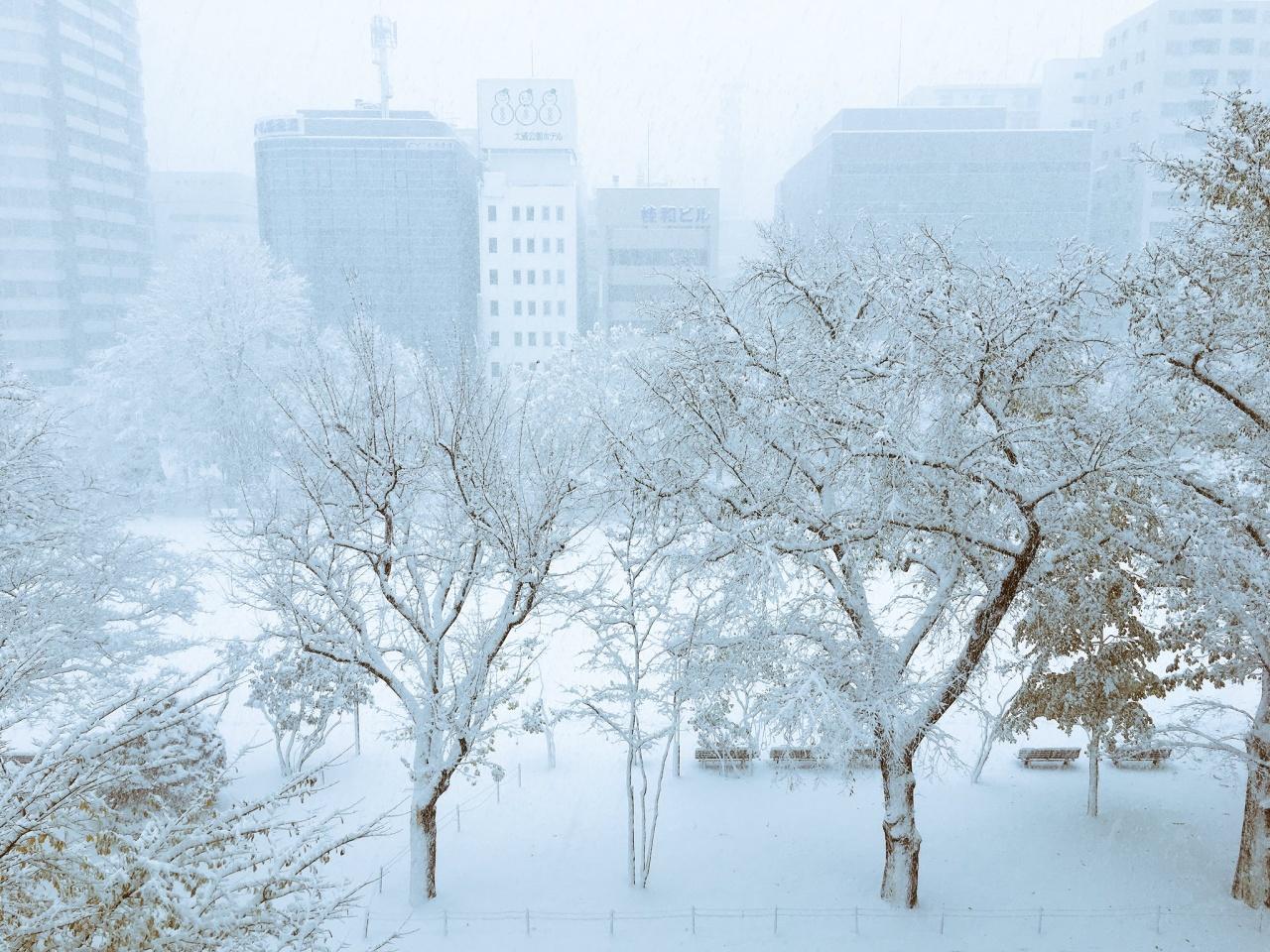 札幌大通公園昨天下雪,景色白濛濛一片。(網絡圖片)