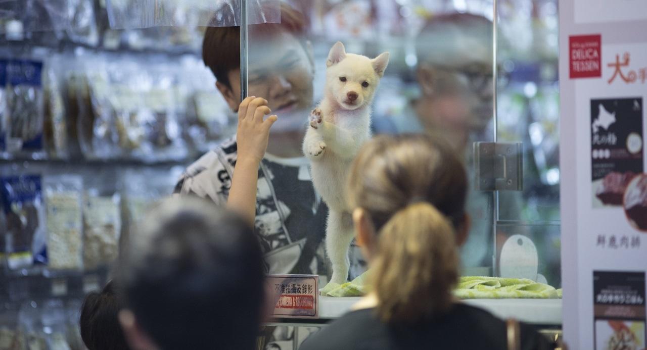 不論租買,同樣是將動物商品化,以一個價錢來等同動物生命的全部。(龔嘉盛攝)