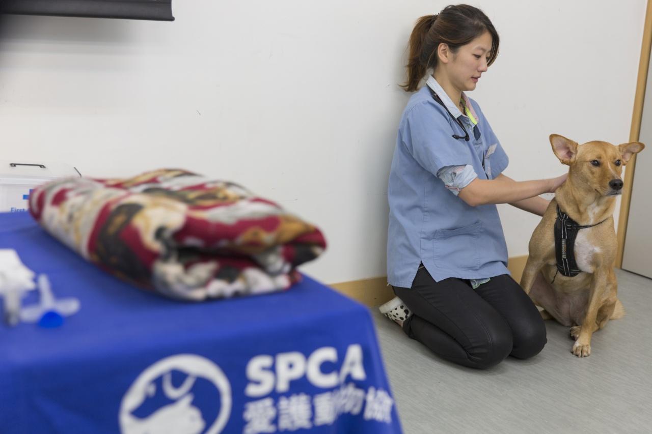 愛協建議有意養動物的人,可先到愛協當義工,學習與動物相處的正確技巧和態度。(資料圖片)