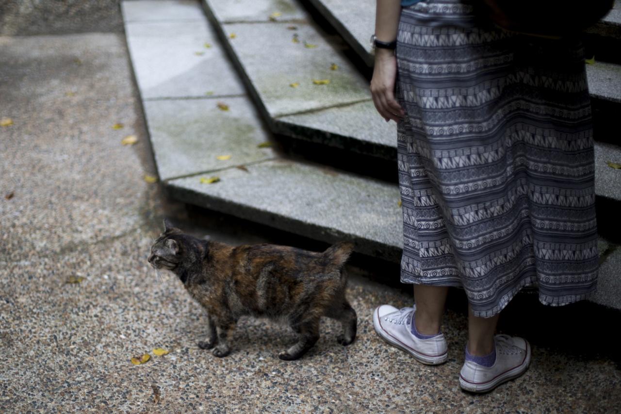 動物團體反駁指在街上生活的動物,並非全部遭人遺棄,而是與人類同共生活的社區動物。(吳鐘坤攝)