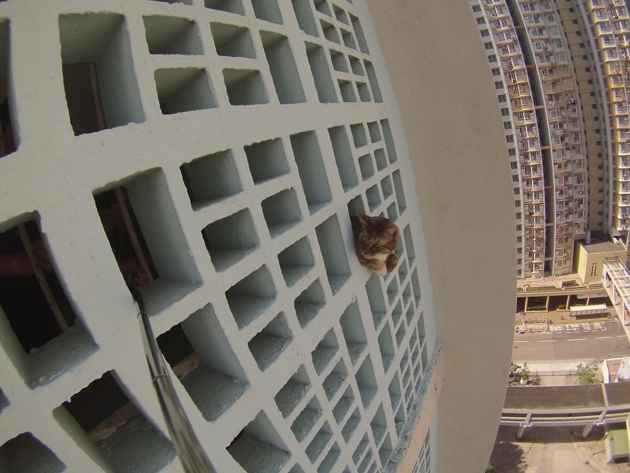 飛貓出窗是最常見的家居貓意外。(愛協提供)