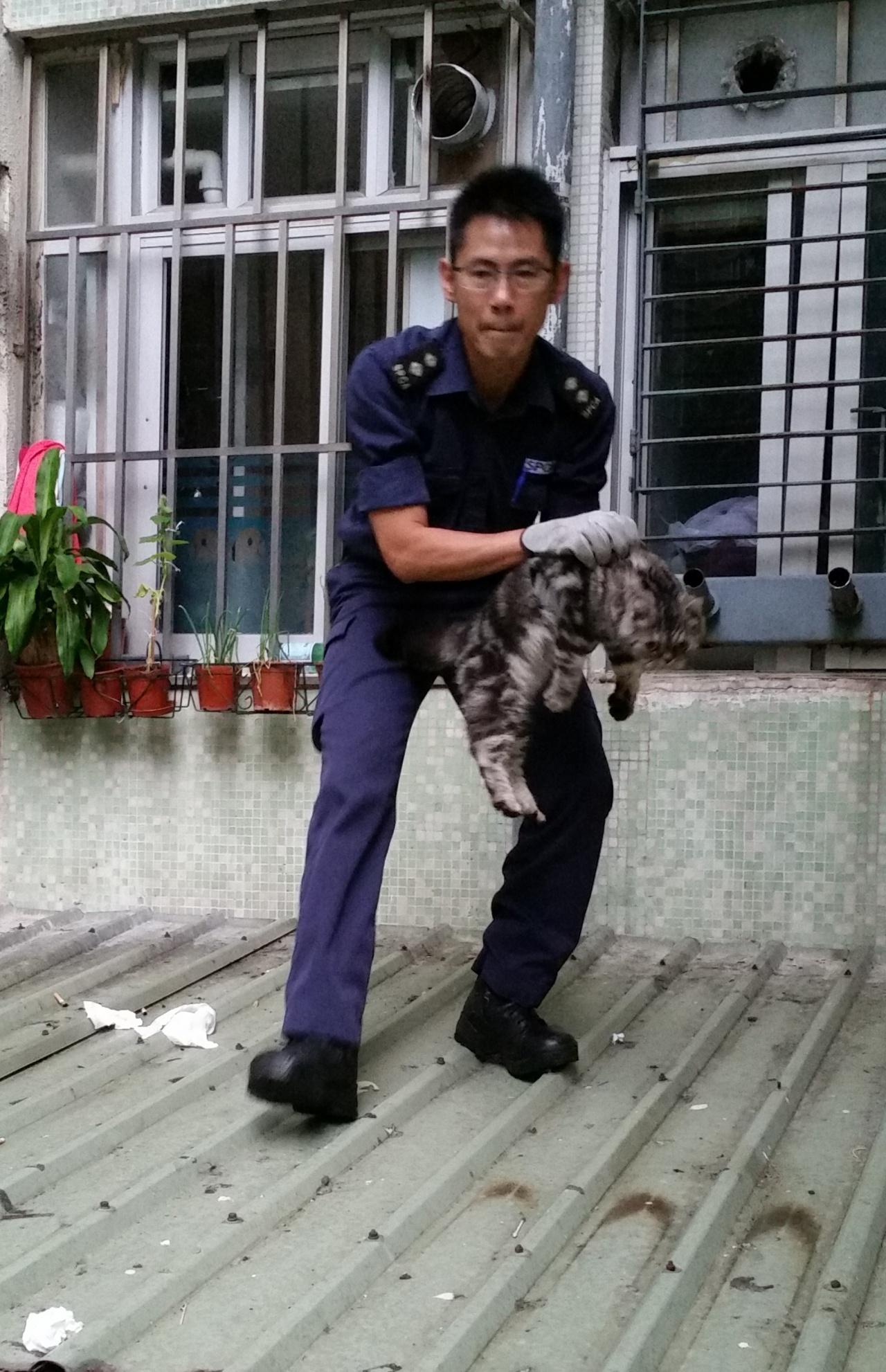 Bob有20年拯救動物的經驗,他說涉及貓的家居意外每周都有至少5宗。(SPCA提供)