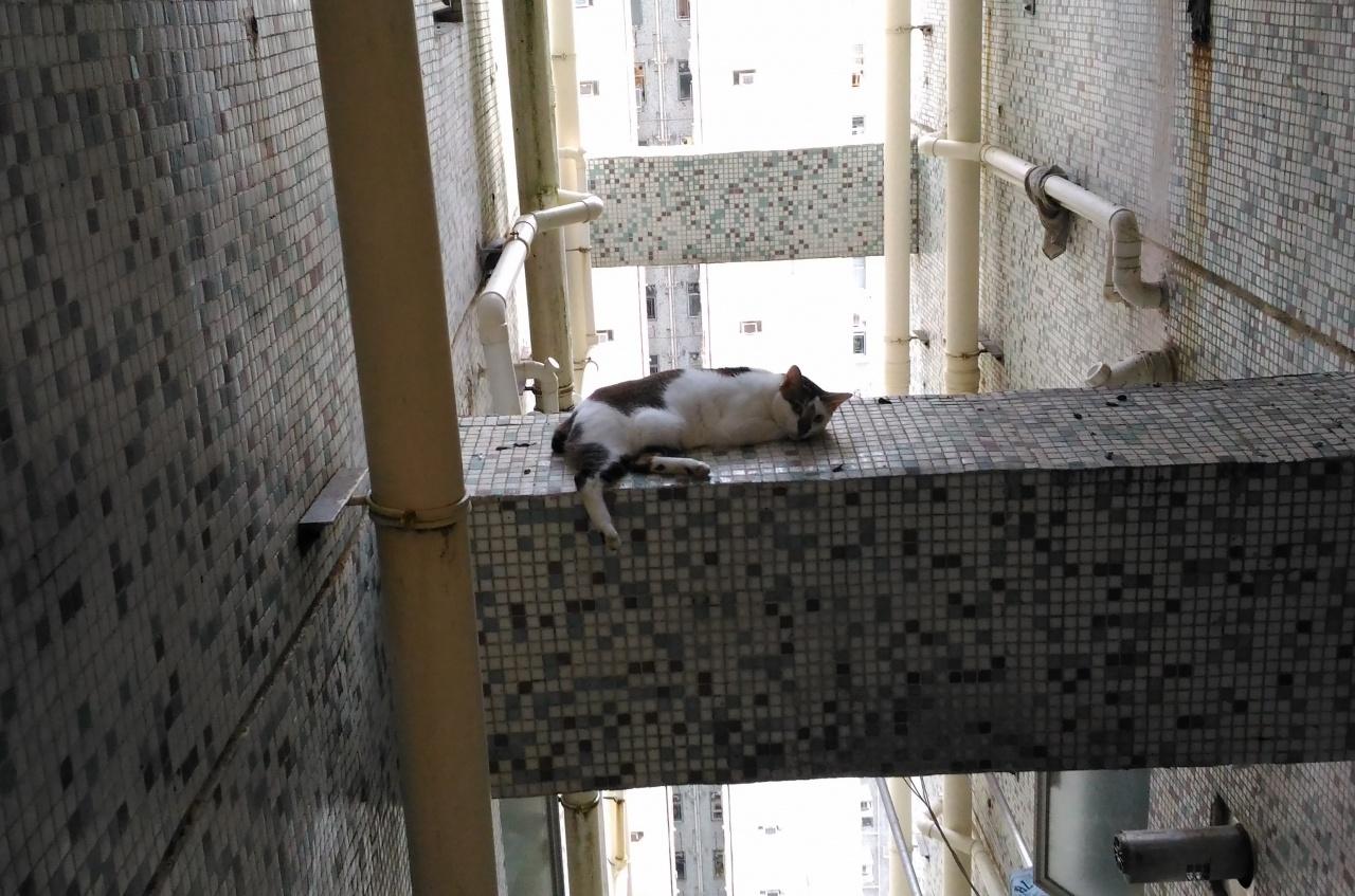 香港某些舊樓,窗戶直接通往天井,貓主需格外注意每一道窗。(SPCA提供)