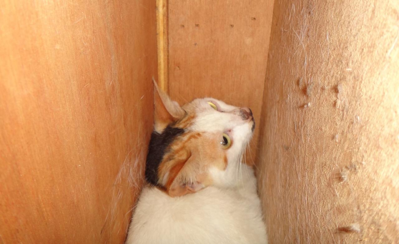 貓主根本無法想像這些狹窄的縫隙,都有可能是困貓的陷阱。(SPCA提供)
