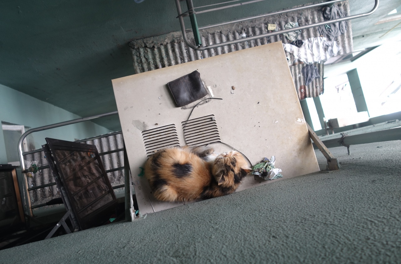 冷氣機頂是不少貓被困的位置,觸目驚心,拯救有一定難度。(SPCA提供)