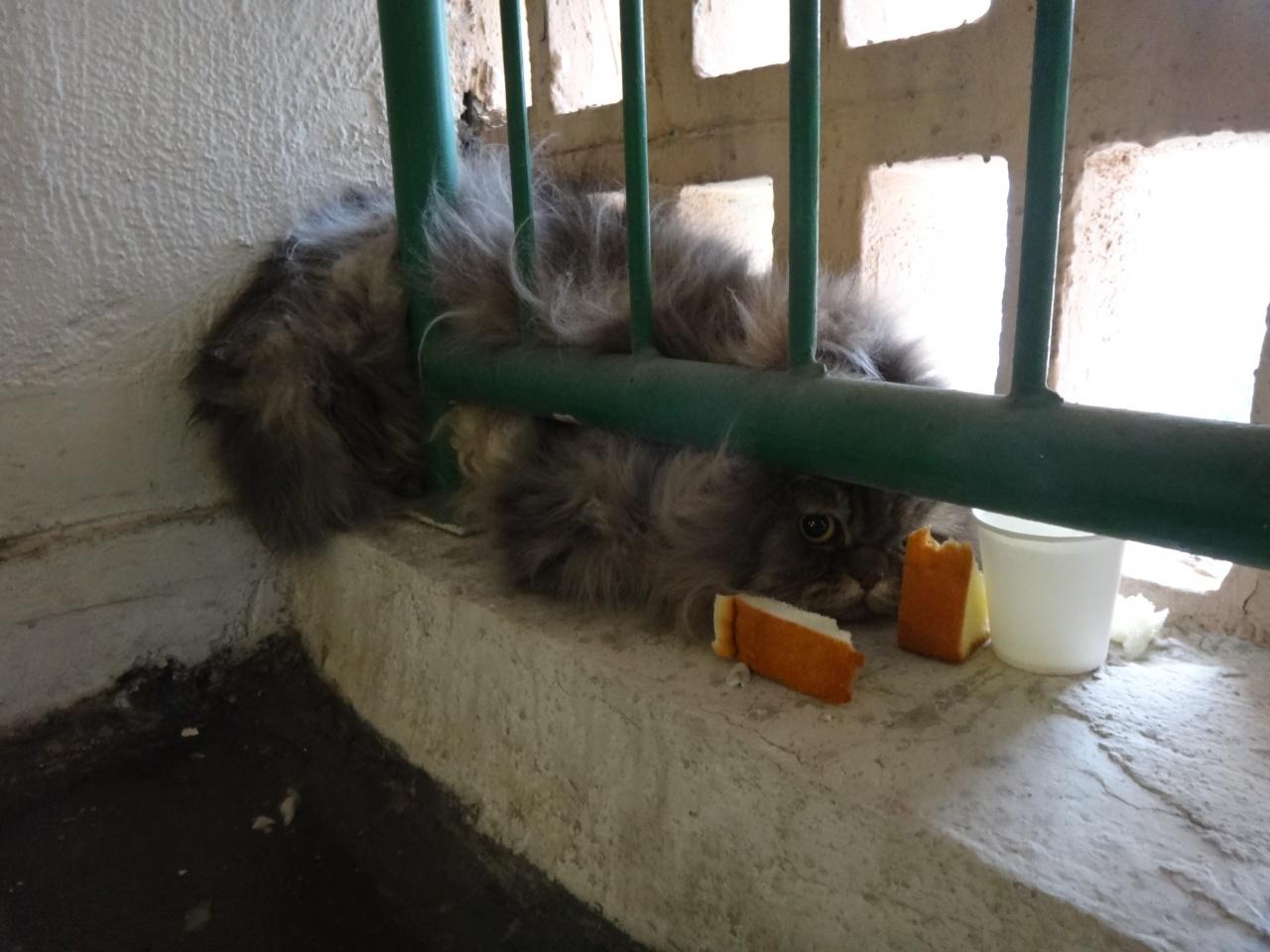 被困於梯間的欄杆與磚窗框之間,如何脫身是好?(SPCA提供)