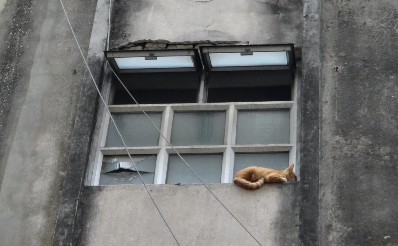 貓能以傢俱作台階,再通過氣窗跳出街,不過卻不能回到屋裏。(SPCA提供)