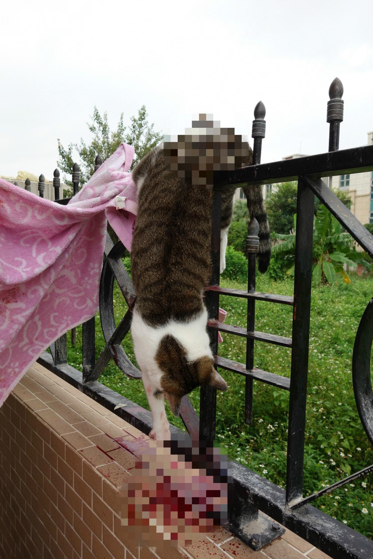 即使住在地下樓層,也應該要裝上窗網,以策萬全。(SPCA提供)