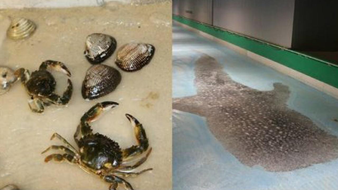 不但是魚屍,還有貝殼、蟹及鯨鯊都被冰封。(Facebook專頁スペースワールド)