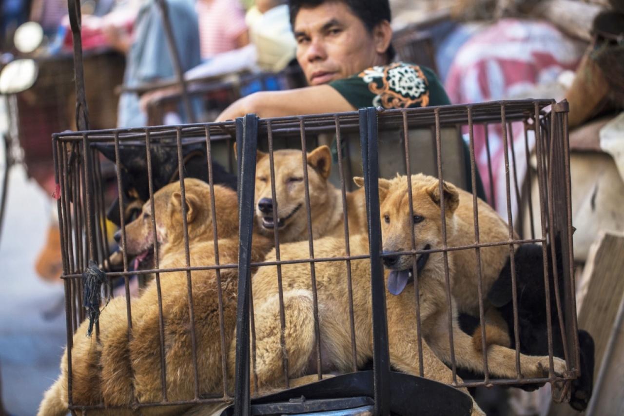 廣西玉林市每年6月都會舉辦狗肉節,《香港01》今年曾到當地採訪。(資料圖片)