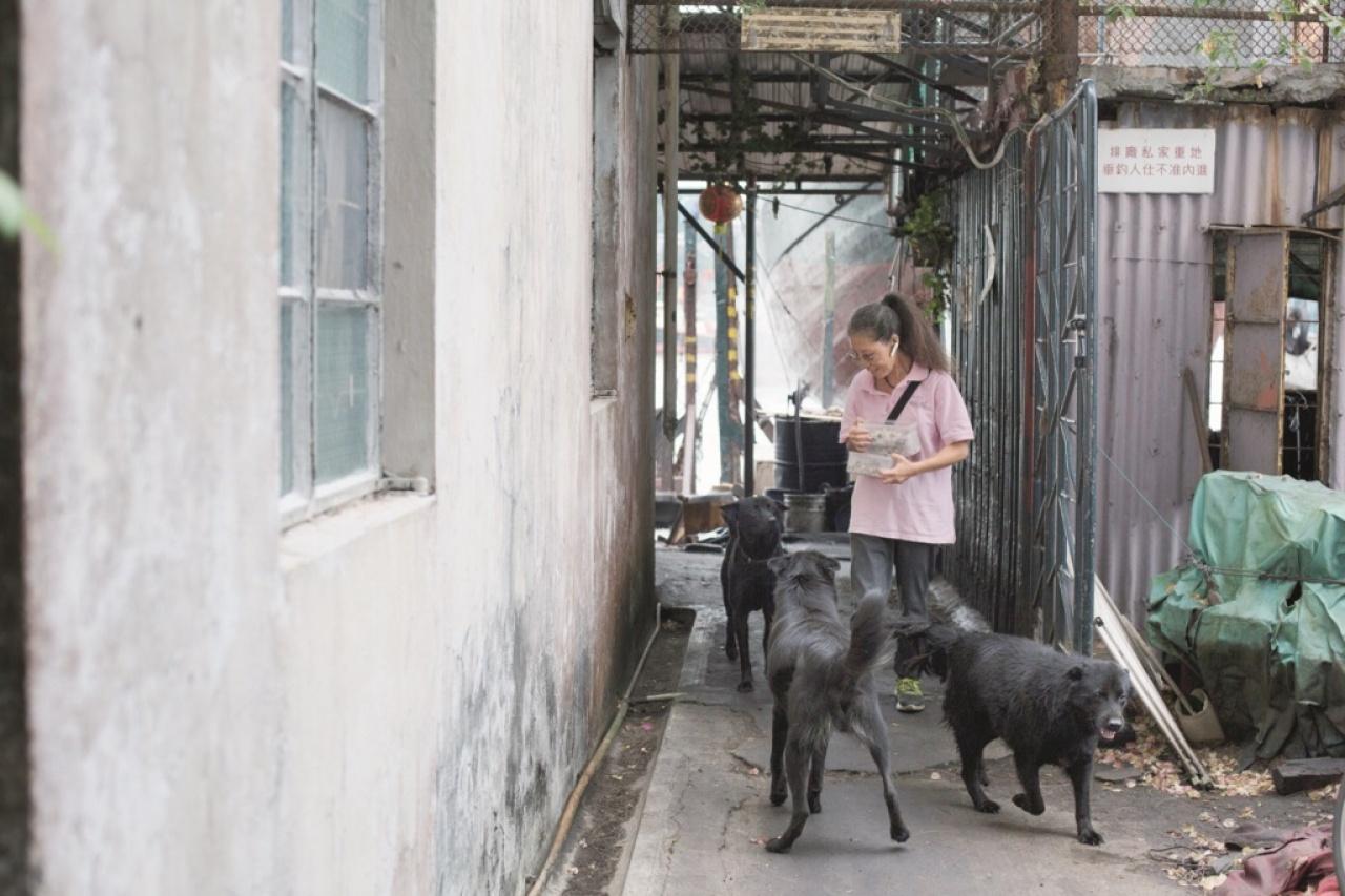 Ida和船廠老闆是朋友,也為他照顧三隻黑狗的飲食。(吳鍾坤攝)