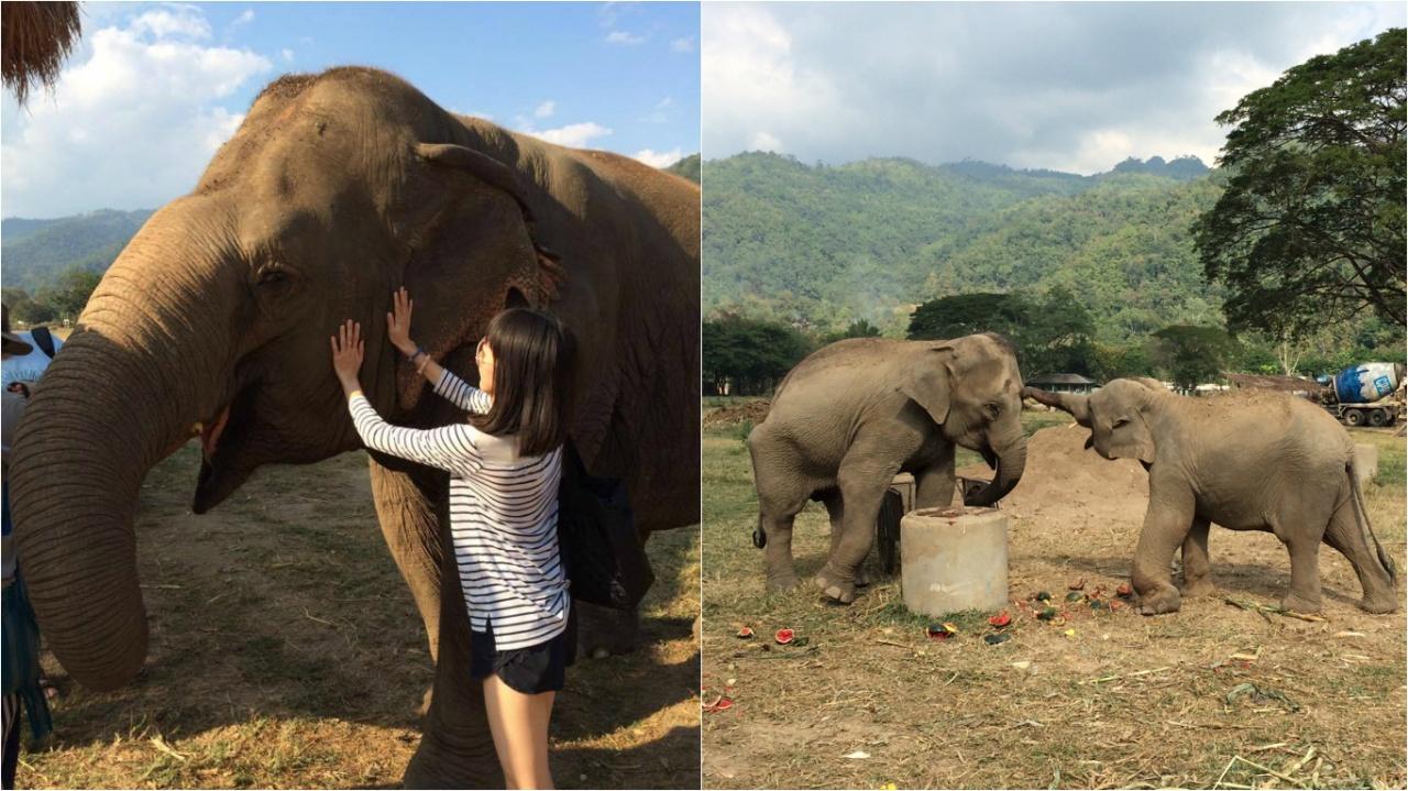 Candy說觸摸到大象的一刻,似與大象有了感應,感受到牠的快樂。(受訪者提供)