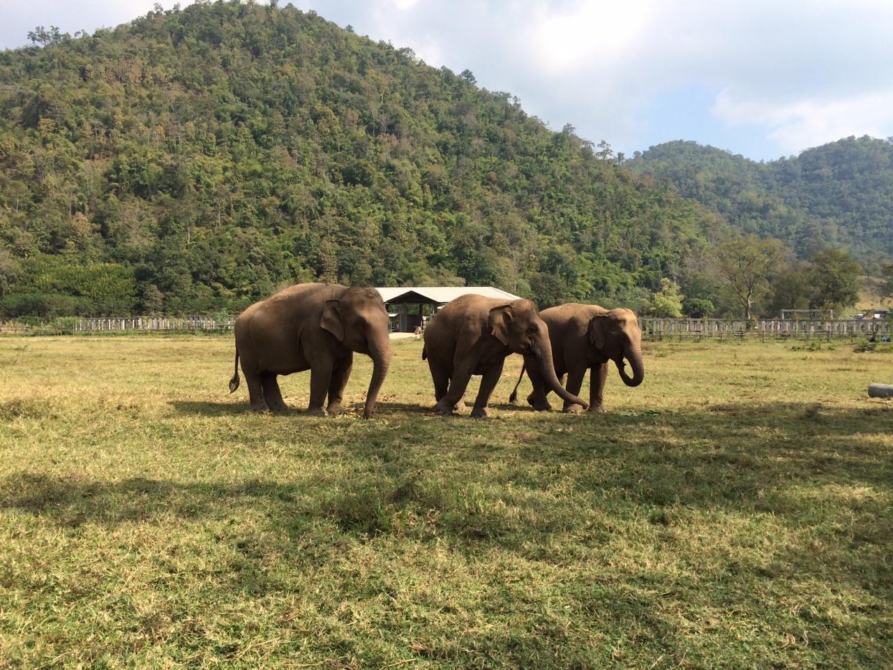 留意大象的腳上都沒有扣上鎖鐐,牠們終能在草原上自己地奔跑。(受訪者提供)
