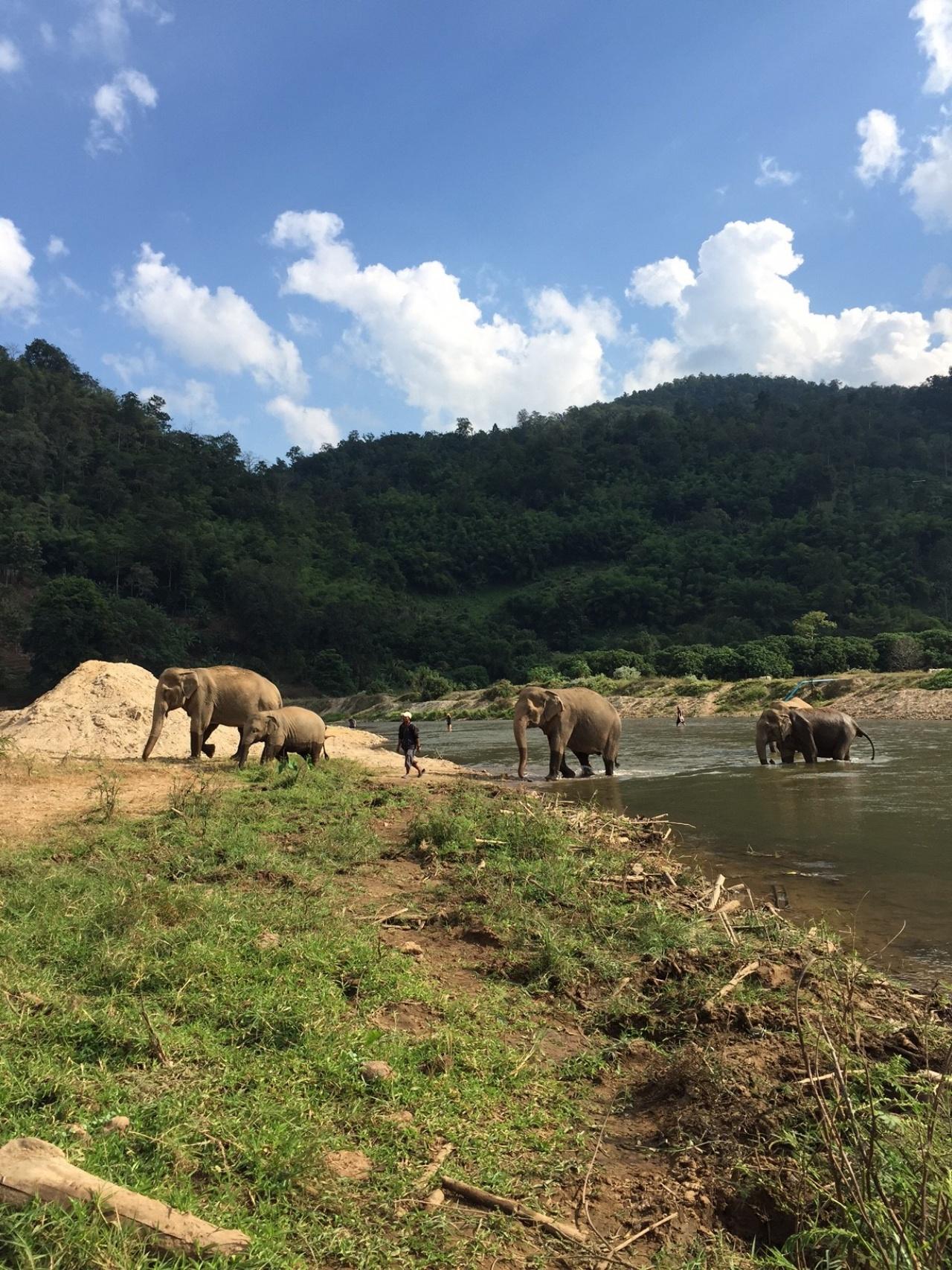 救搬中心旁邊有一條河,大象平日會在河中戲水沖涼。(受訪者提供)