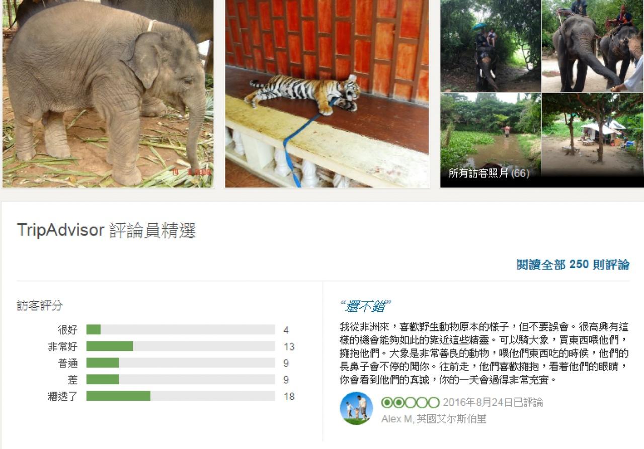Tripadvisor網站早前宣佈不再於網站內代為銷售「虐待動物景點」的門票。但網站上仍有不少旅客上載騎象、與虎拍攝的照片和好評留言。(網上截圖)