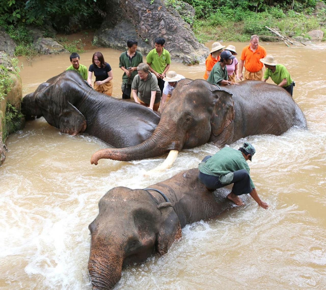 緬甸伐木業將老象淘汰,幸得義工團體將部份救到拯救中心,值得大家支持。(Green Hill Valley Elephant Camp)