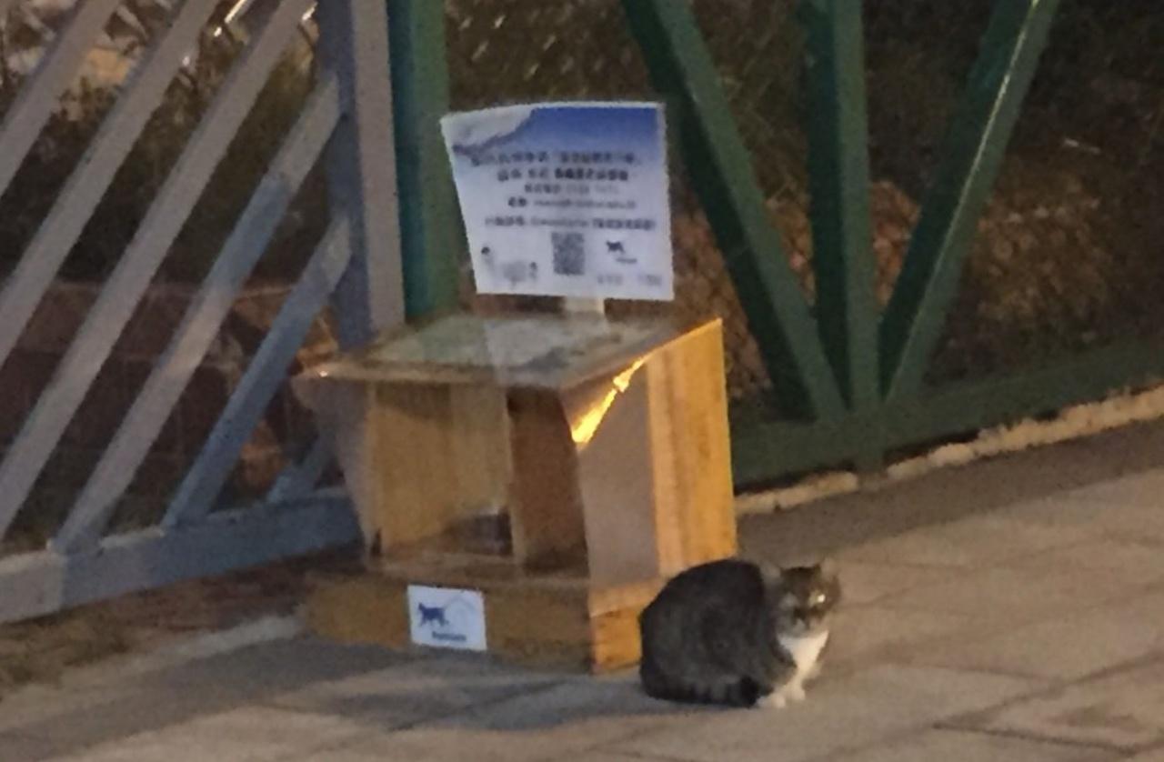 貓屋放罝兩天,已吸引了流浪貓入內進食。(受訪者提供)
