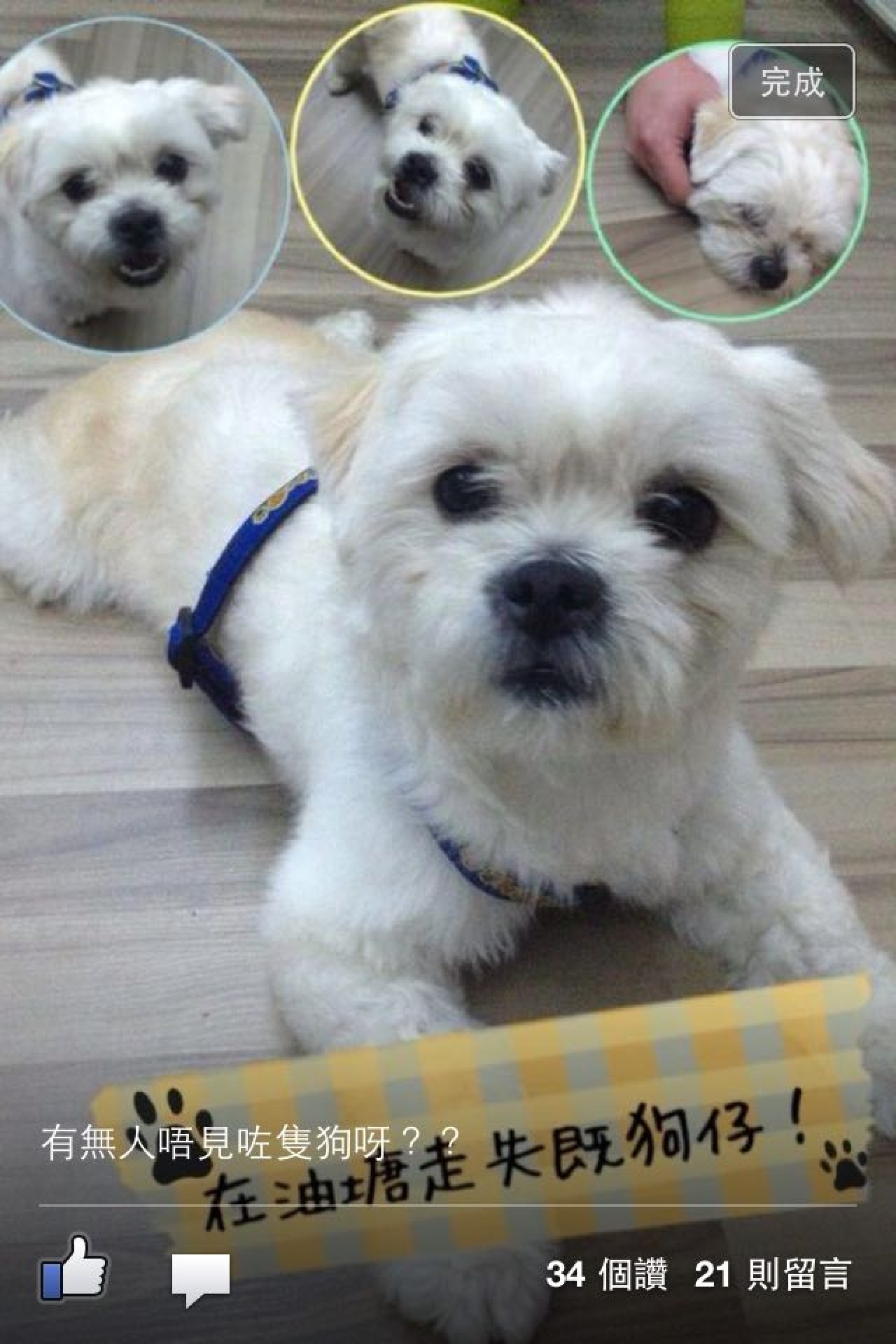 3年前,好心貨倉職員以為Cha Cha是失狗,嘗試貼告示替牠尋回主人。(受訪者提供)